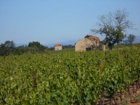 vineyard huts
