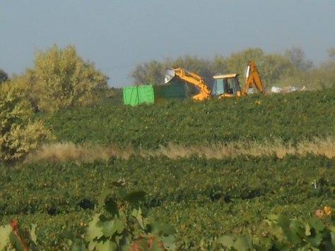 harvest preparation