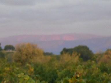 Languedoc hills