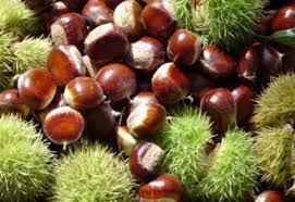 season chestnuts