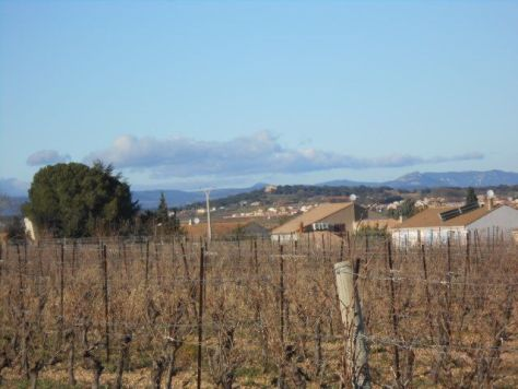 Vines January 2015