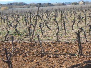 Vines January2015-2