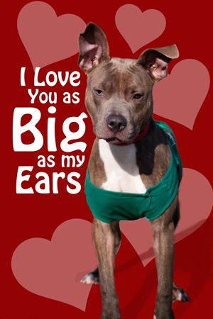 Valentines Day Love Gifts For Your Pooch Have Dog Blog