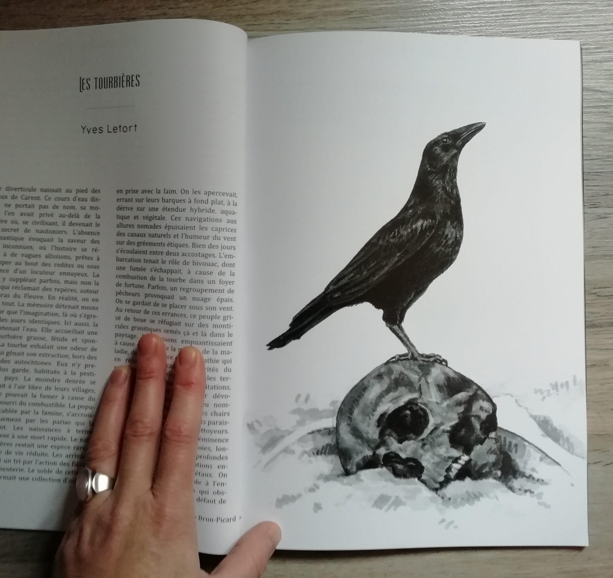Massacre (6bis) / Illustration (L'Ampoule hors série n°8)