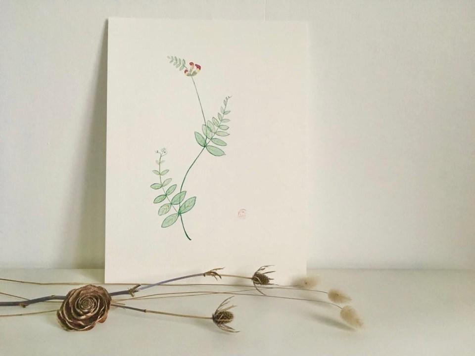 Aquarelle plante fleur sauvage