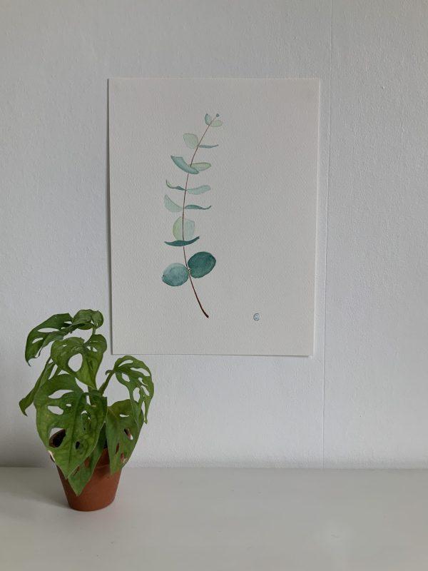 Aquarelle eucalyptus bleu vert