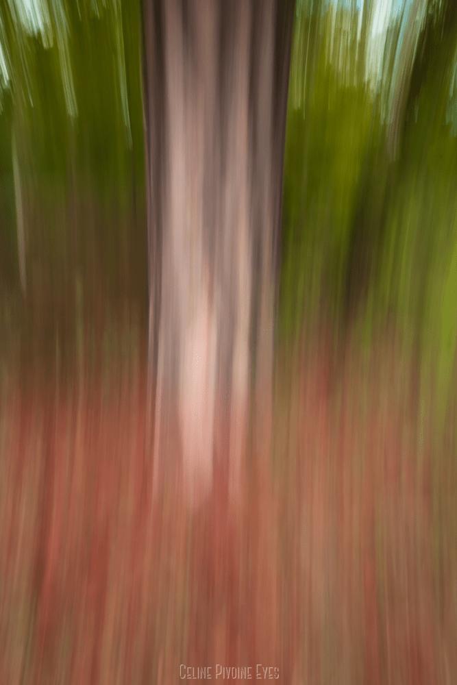 Un arbre en forêt de Fontainebleau à l'automne en ICM Intentional Camera Movement