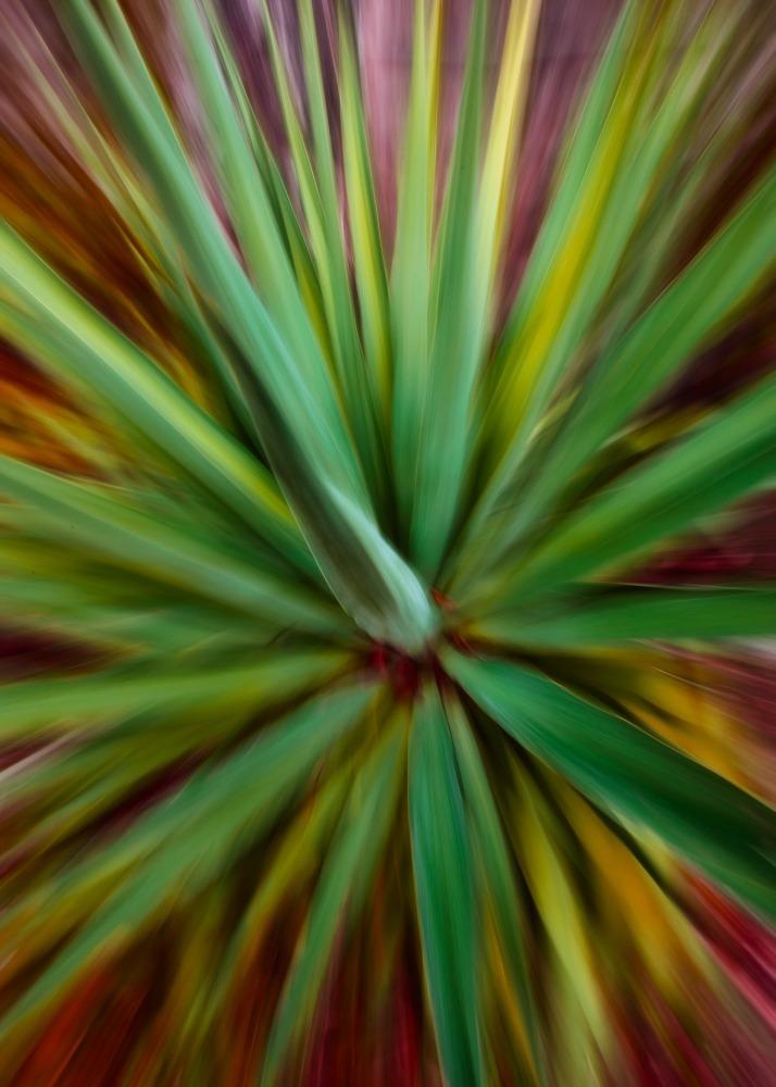 Un yucca en ICM