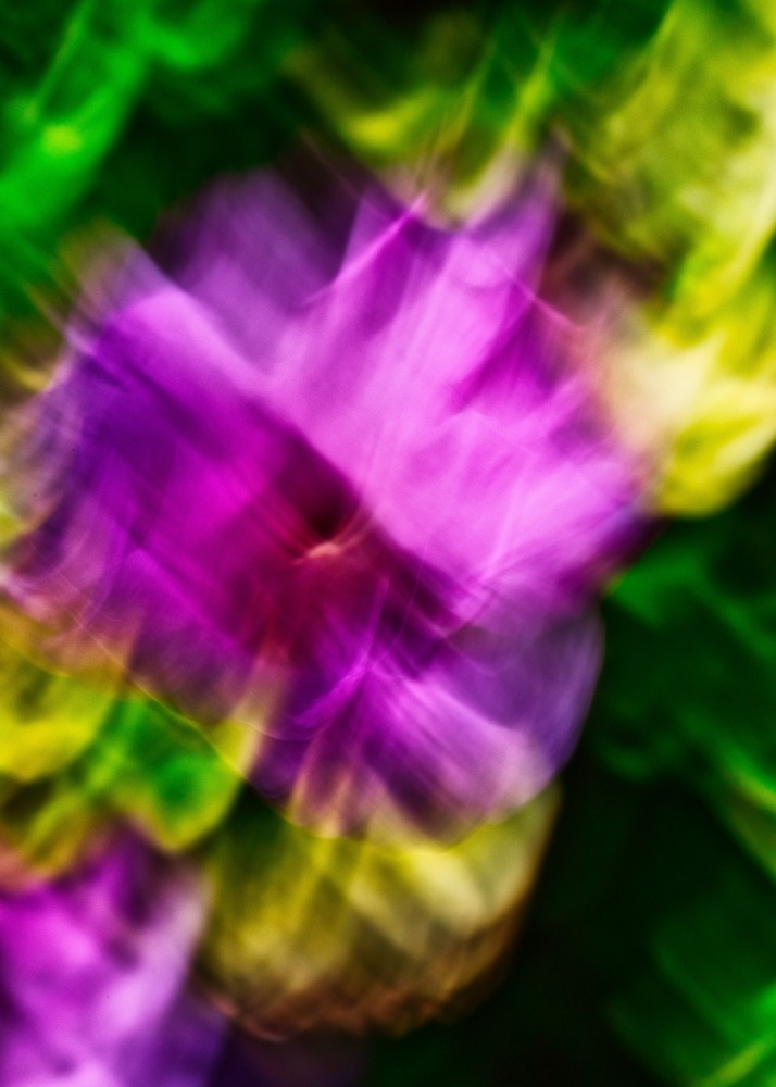 Fleurs de printemps en Intentional Camera Movement ICM