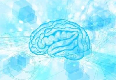 あなたの体型は小脳のデータで決まる!?