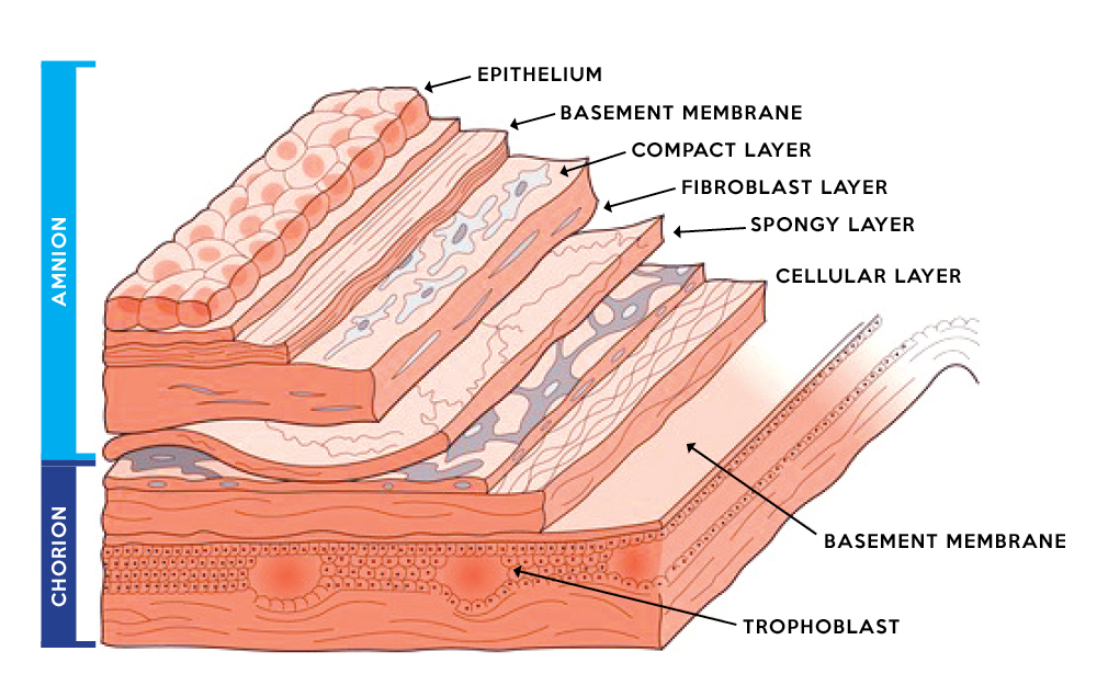 Wounds Acute Inflammatory Phase