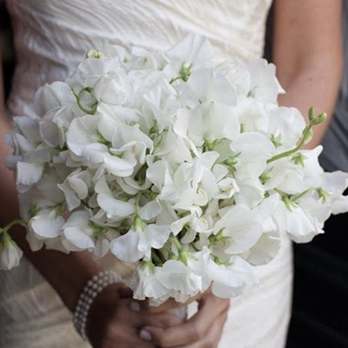 sydney-wedding-flower-packages-prices-cheap-affordable-bouquet-sweet-pea