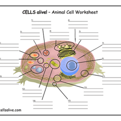 Animal Cell Blank Diagram To Fill In Draw A Of How Policy System Works Cells Alive Study Aids