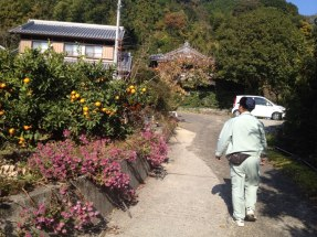 Ini dia kebun jeruk di depan rumah & pemiliknya..