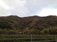 View di sekitar lokasi..