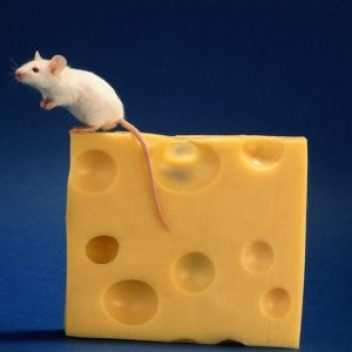 rats-and-cheese