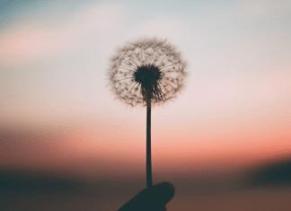 trauma healing recovery