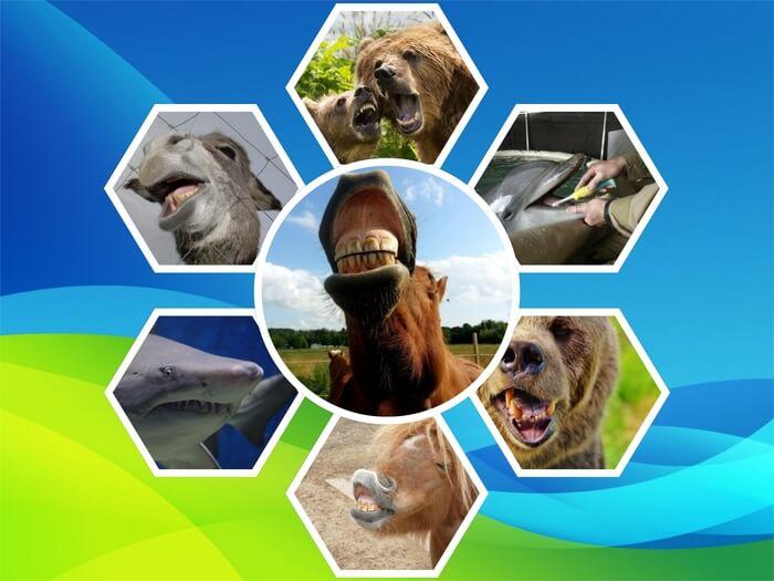 Es un collage de dientes de animales como el burro caballo oso delfin y tiburon