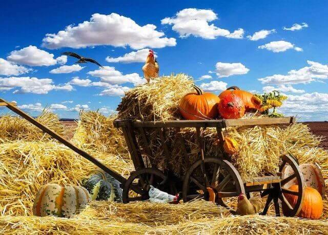Es una carreta en el campo con calabazas y arriba esta un gallo y en el cielo se mira un ave volando