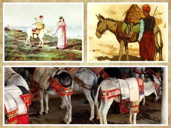 Es un collage de tres fotos burros que son utiles al ser humano