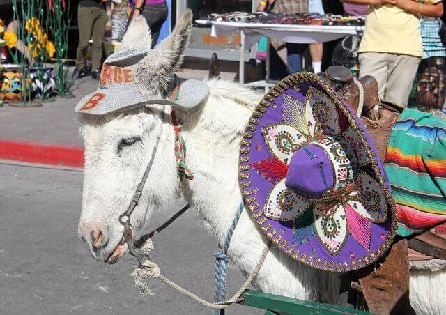 Este es un burro amarrado a la carreta y con un sombrero para sacar fotos para los turistas que visitan Mexico