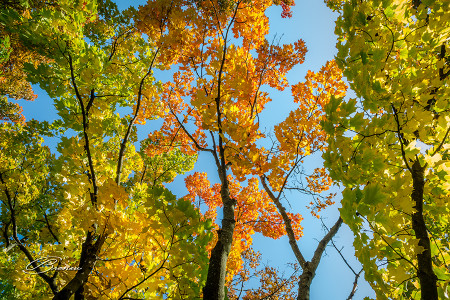 The Beautiful Colors of Fall.