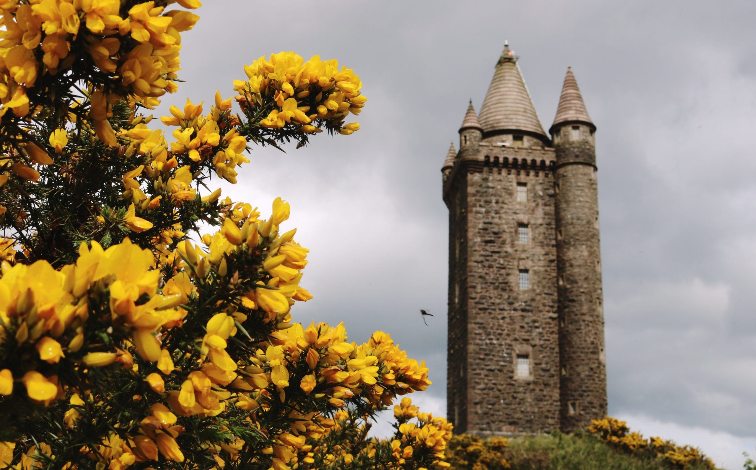 scrabo tower grey yellow rachel ennis