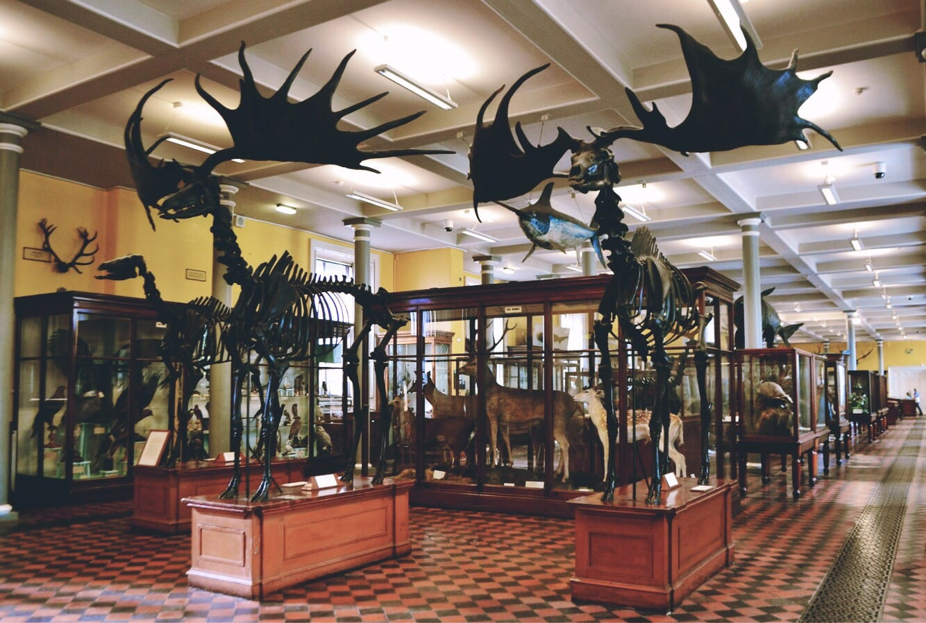 irish elk dead zoo dublin