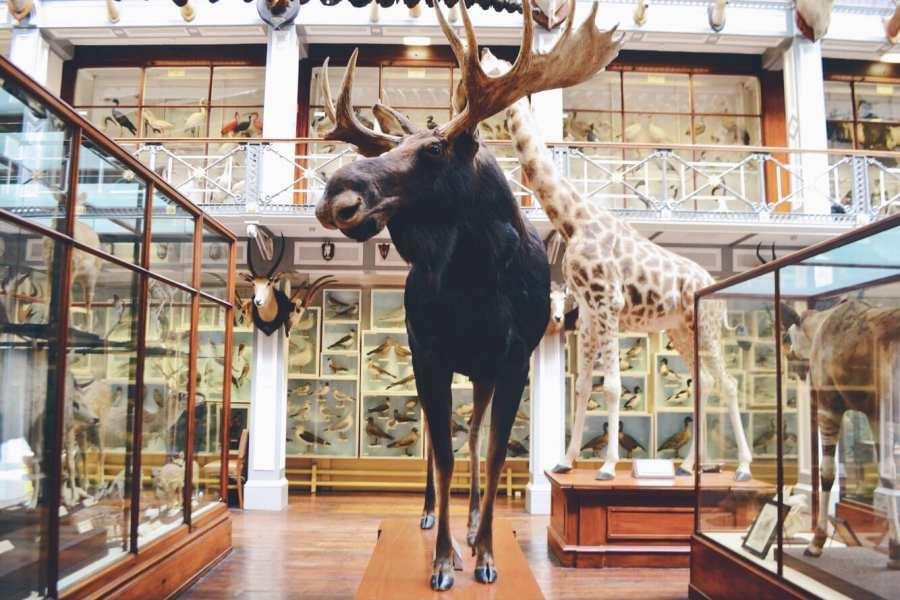 moose dead zoo