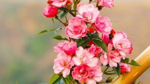 Indian Rose Damask