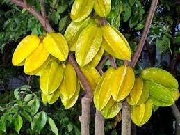 balimbing merupakan salah satu jenis buah yang memiliki bantuk
