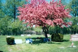 Glorious spring in Michigan