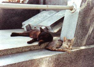 Brian-Res-cats002