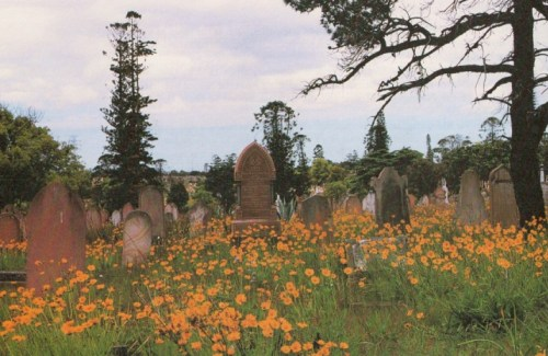 Rookwood wildflowers
