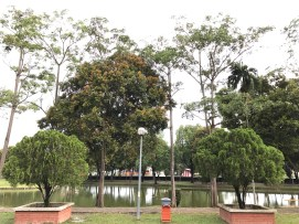 Tasik Y multipe size of trees