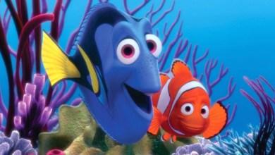 Foto de Procurando Nemo
