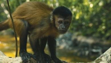 Foto de Amazônia