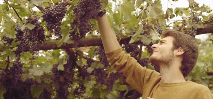 Slow Filme: Meridiano do Vinho