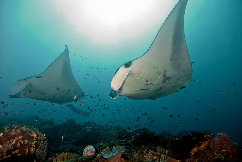 Lembongan Dive Courses