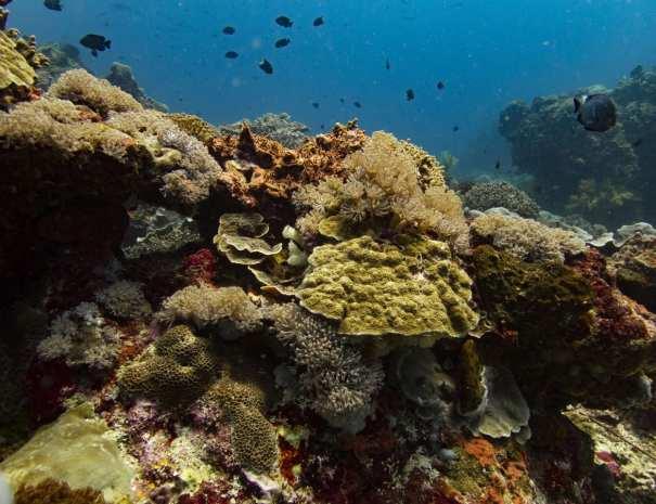 Diving Lembongan