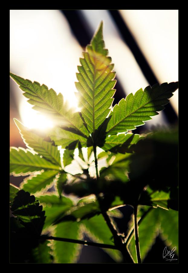 marihuanita_3_by_fattzzo1