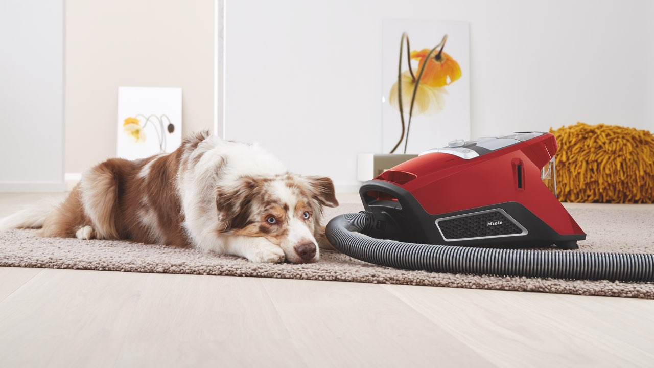 Miele HomeCare CX1 bagless canister vacuum cleaner and dog
