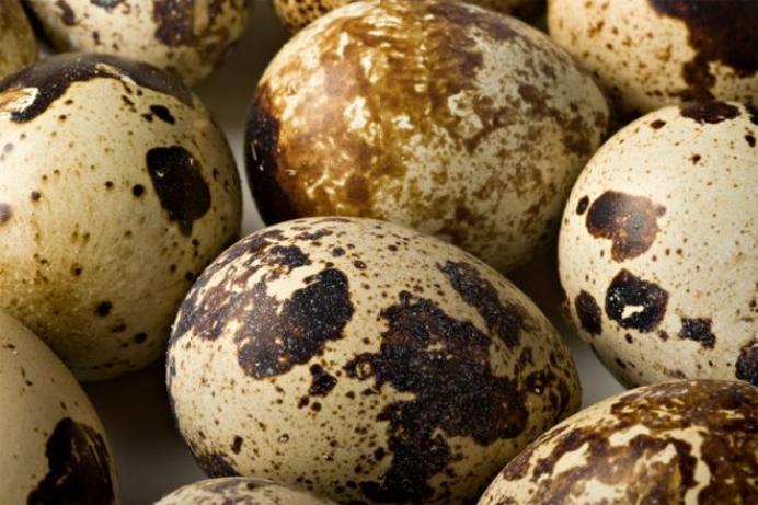 659377 - Quail Eggs.jpg