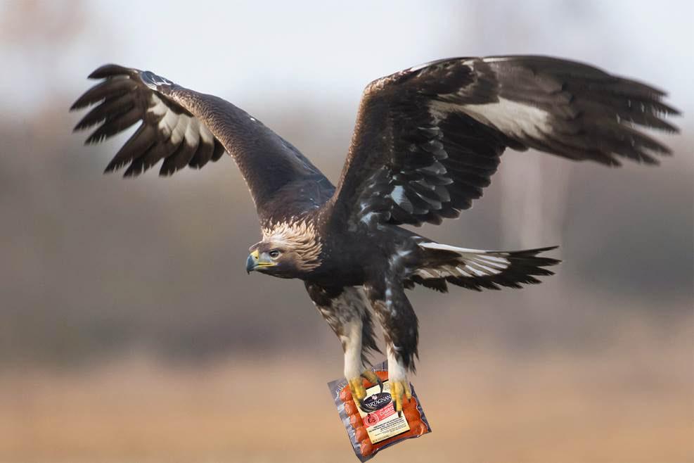 Eagle with Chorizo.jpg