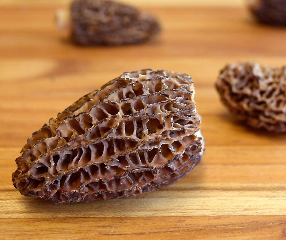 morel-mushroom-closeup-1748674584-1523914010839.jpg