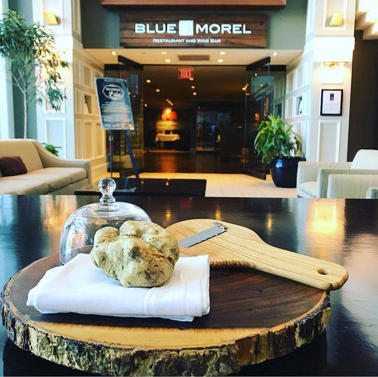 Blue Morel White Truffle Photo
