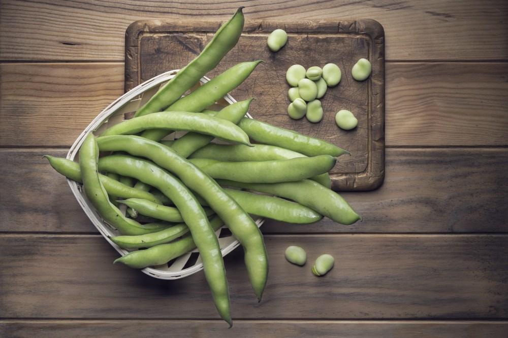 Fava Beans SM