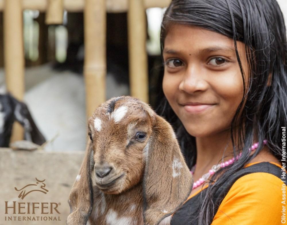 Heifer Top Image.jpg