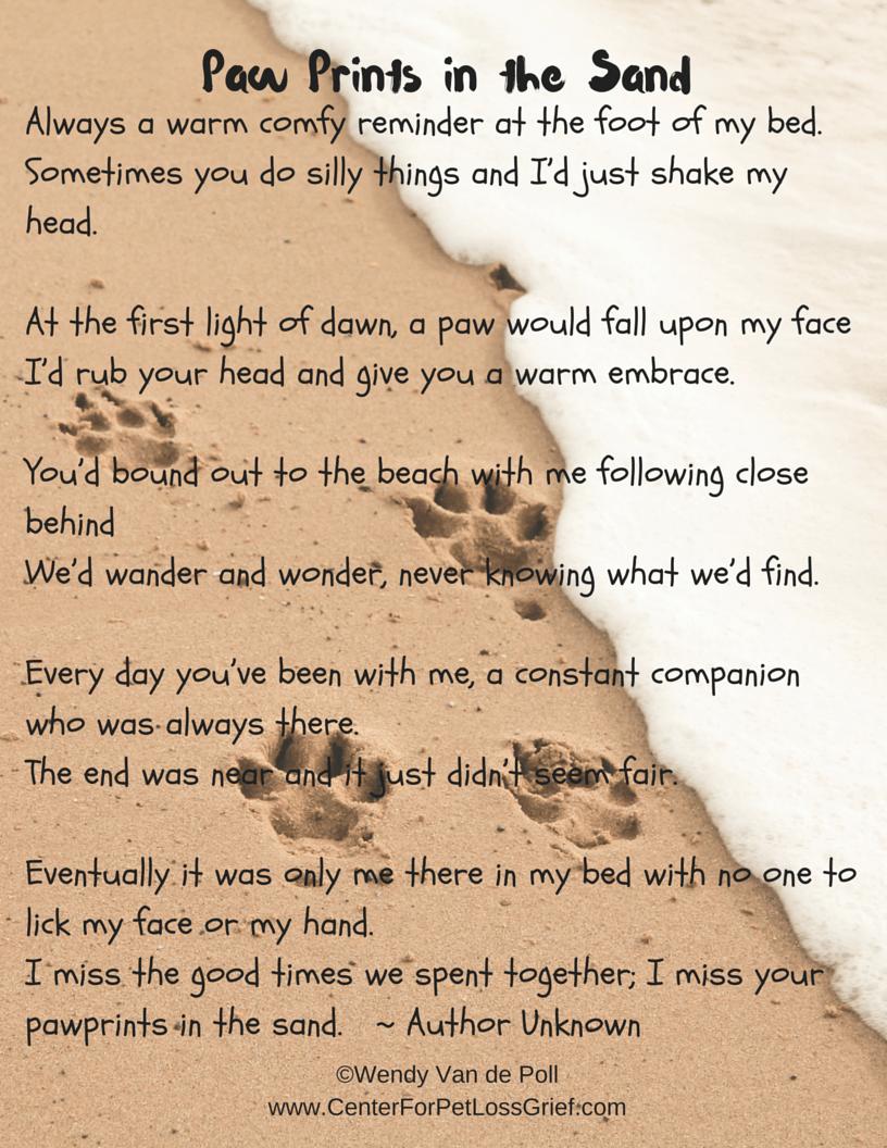 07e863e11 Pawprints In The Sand