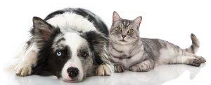 myths of healing pet loss